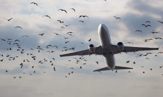 Putnu sadursmes aviācijā