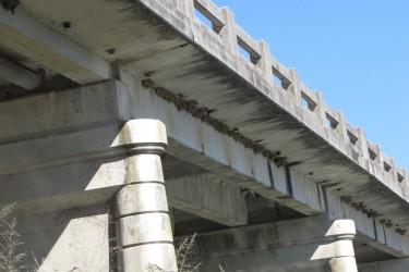 Putnu aizsardzību zem tiltiem