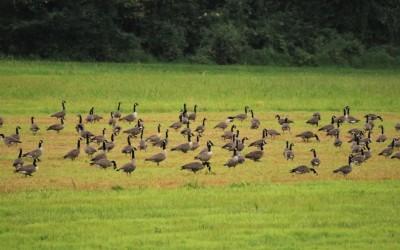Putnu populācija