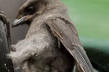 Ultraskaņas putnu atbaidītāji
